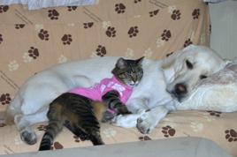愛犬と愛猫の写真