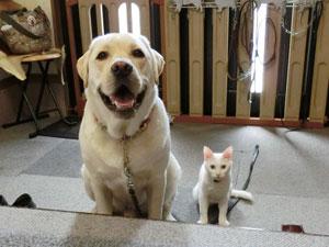 タイト君と猫の写真